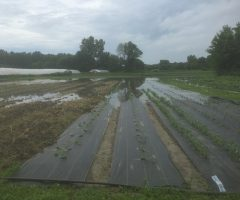 Recent Flooding at our Farm