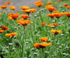 5 Flowers We Love (and grow)