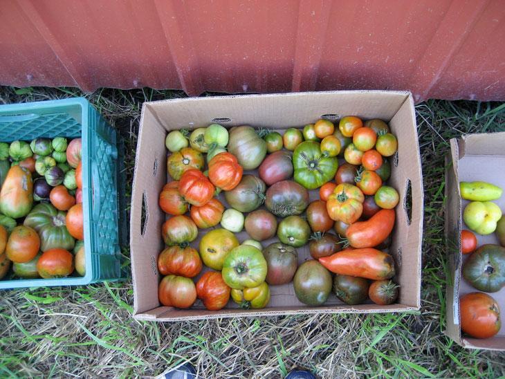Seasonal Farm-to_table Fresh Local Tomatoes in Wedding Menu